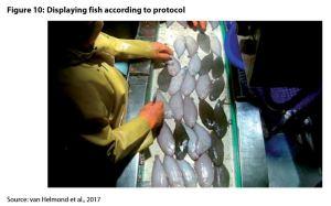 Figure 10: Displaying fish according to protocol