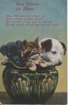 Pets-in-Bowl-A