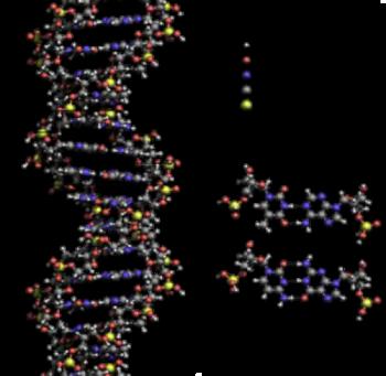Security DNA 1