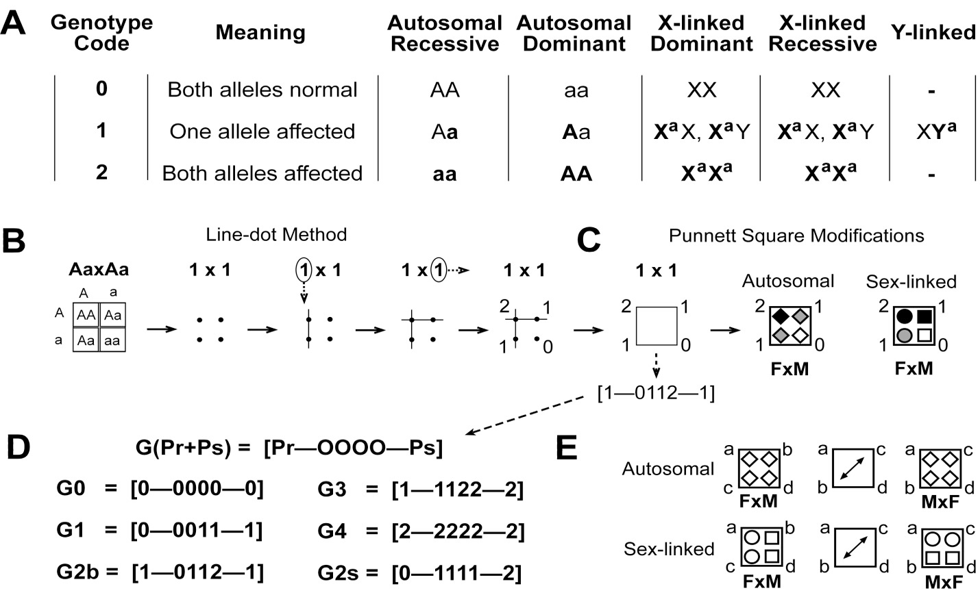 Genotype And Phenotype Probabilities By Ternary Code Based