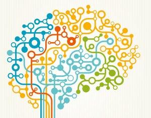 brain network connectivity