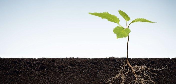 sustainable soil management