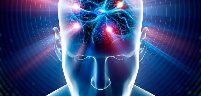 GABAergic neuron connectivity