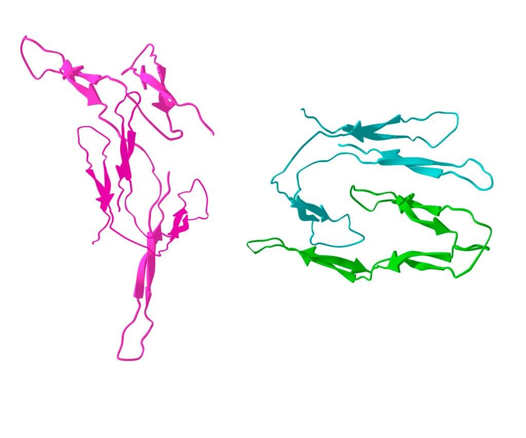 protein cancer