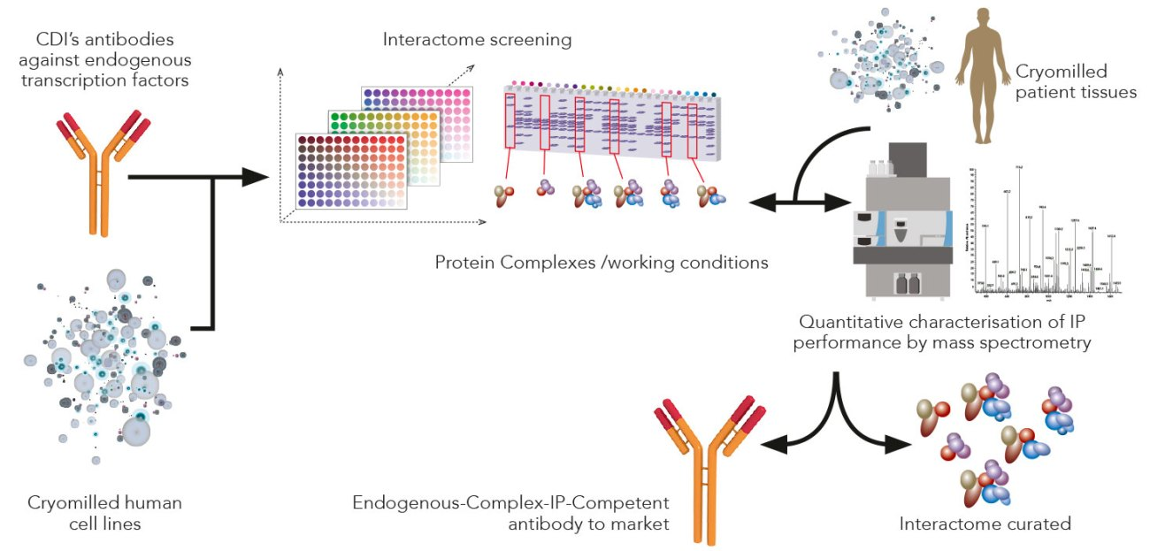 human protein complexes