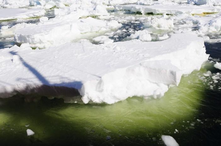 Amundsen Sea Polynya