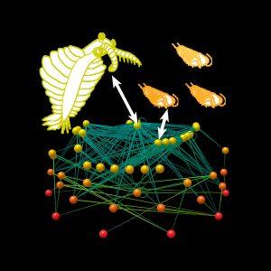 Half billion year old Cambrian food web