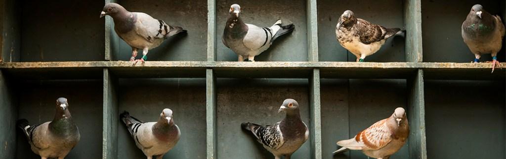 """""""Birdbrain"""" you say? Why thank you"""