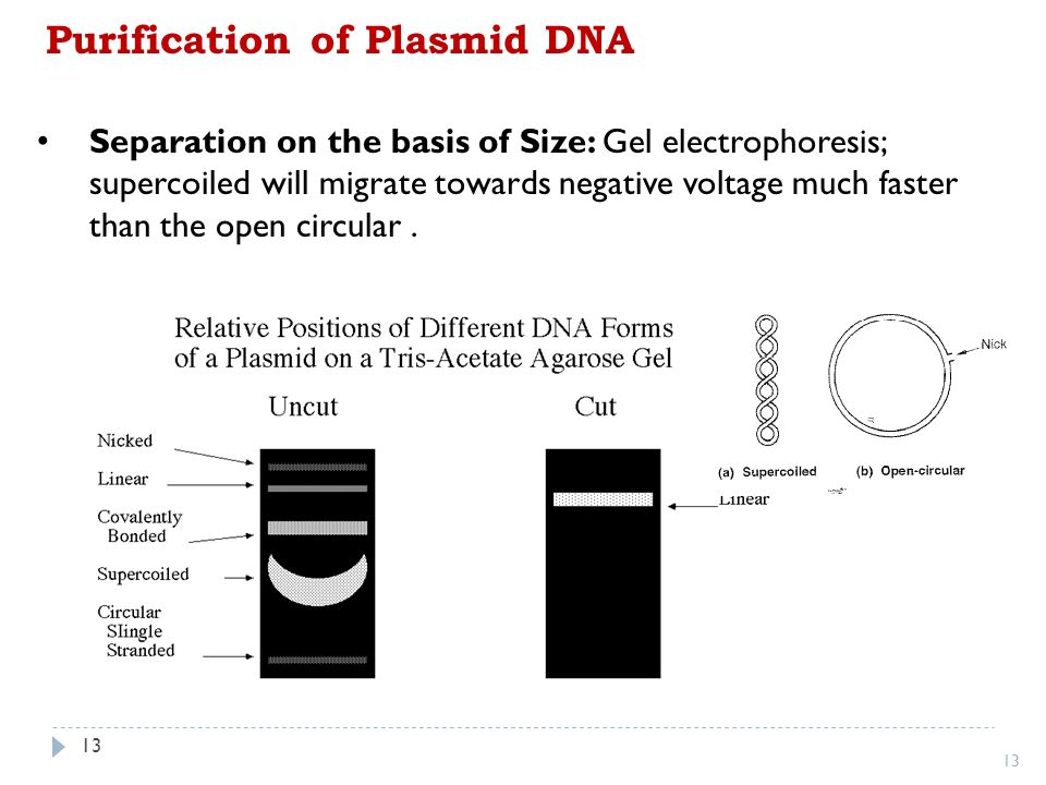 Chromosome Vs Chromatin Who Will Represent Exact Size Of Plasmid Vector, The