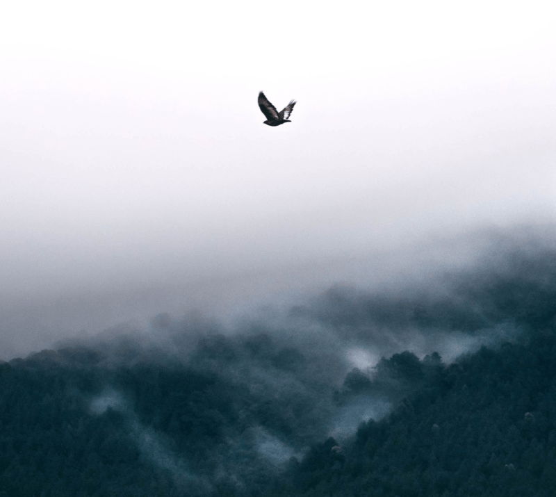 Bird above forest.png