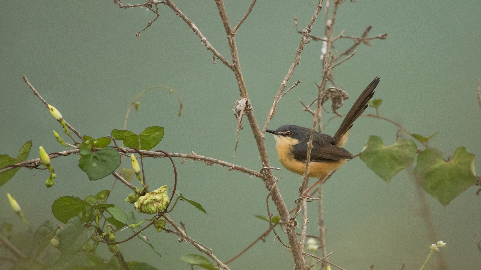 Listening to birds amidst the urban hustle-bustle | Research Matters