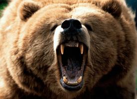 """Résultat de recherche d'images pour """"menace russe ours"""""""