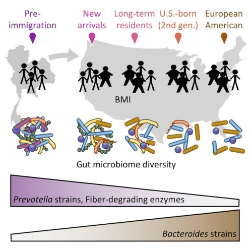 microbiote 20181129