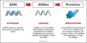 Le dispositif à ARNm anti-Covid n'est PAS un « vaccin », ni même un médicament, un traitement ou une thérapie – Alors, c'est quoi ?