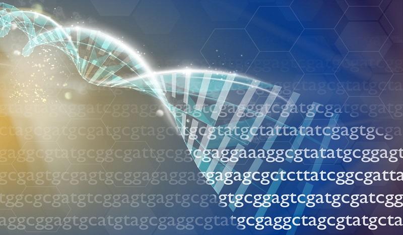 Peut-on penser l'ADN comme un code informatique ?