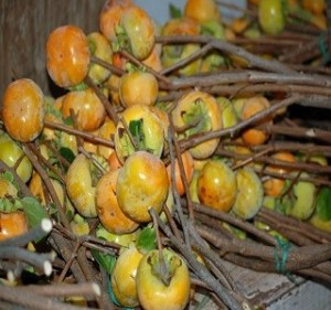 Fruited Persimmons