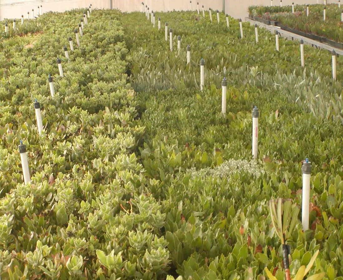 Greenhouse Plant Resendiz Brothers California