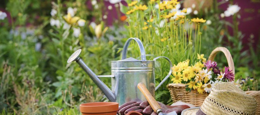 Tips Menanam Sendiri Sayur dan Buah di Rumah