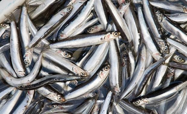 5 Aneka Potongan Ikan yang Cantik dan Mudah