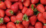 Tips Memilih dan Menyimpan Buah Stroberi