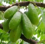 5 Tips Memilih dan Menyimpan Belimbing Sayur atau Wuluh