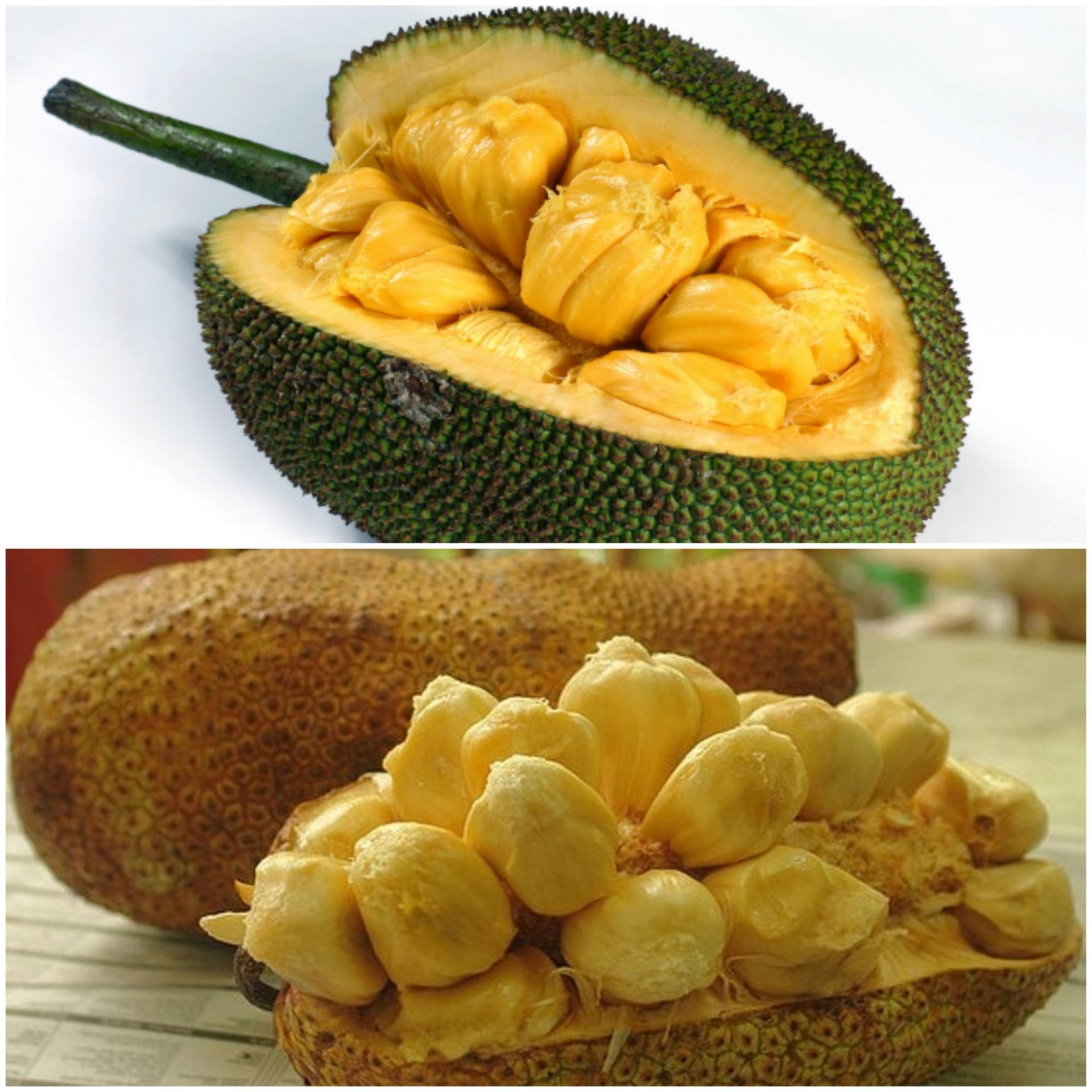 Image result for nangka vs cempedak