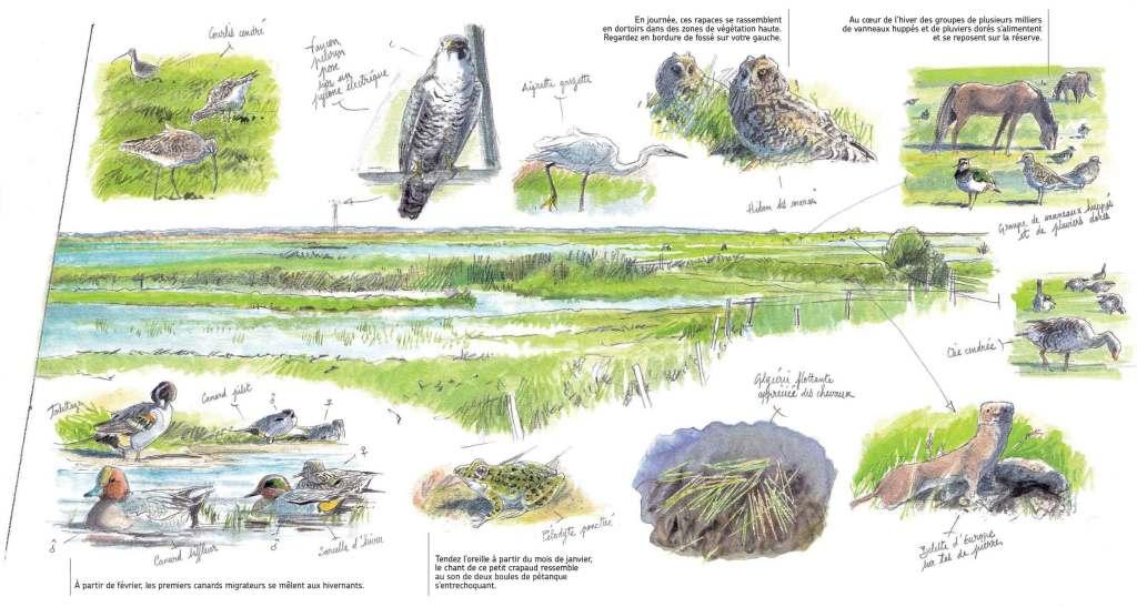 Le Marais en hiver. Quoi voir et quand ? Réserve naturelle régionale du Marais de la Vacherie