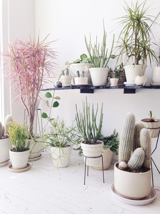 Living Room Plants Ideas With Digalerico Throughout