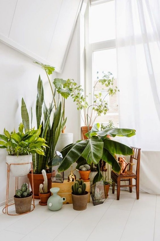 7 different way to indoor plants decoration ideas in living room - House Plants Decoration Ideas