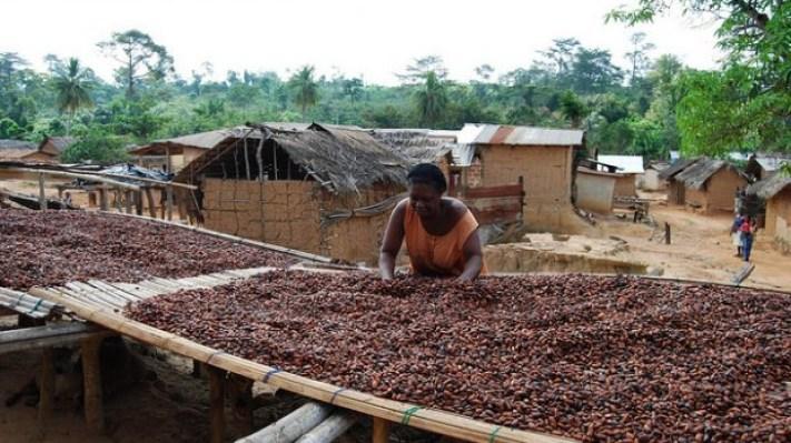 cocoa_woman