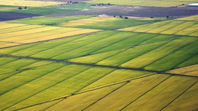 sacramento_rice_fields-mark-miller-cc-by-30-2-968x545