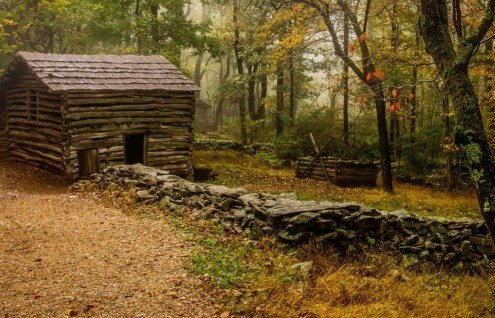 log cabin in forest