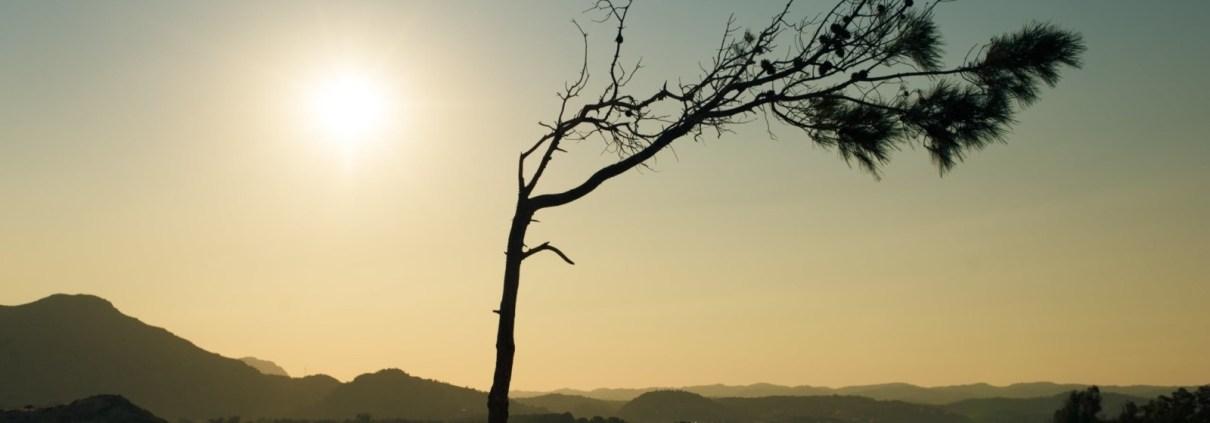 Tree bare with sun shine