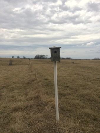 Doc Kinkead a positionné de nombreux nichoirs pour un meilleur contrôle des parasites sur sa ferme https://resilientagriculture.wordpress.com/2017/03/31/robert-kinkead-grazing-wisdom-eleveur-sans-troupeau-et-paturage-tournant/