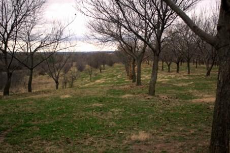 HARC Agroforestry : Centre de recherche en agroforesterie dans le Missouri - Sélection de châtaigniers : HARC Agroforestry : https://resilientagriculture.wordpress.com/agroforestry/agroforestry-2/