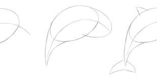 Yunus Balığı Çizimi