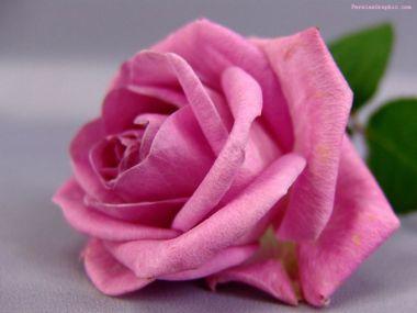 flower_239