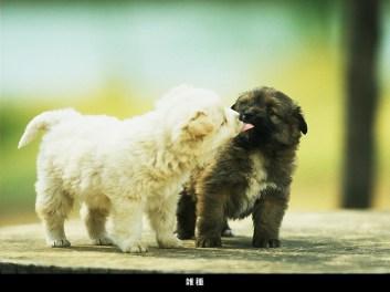 Köpek-Resimleri103