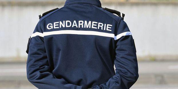 En tout, quinze animaux sont morts, un mouton ayant dû être euthanasié, rapporte la gendarmerie.