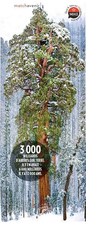 Les Plus Grands Arbres Du Monde : grands, arbres, monde, Hyperion,, Séquoia, Mètres, Secret, L'arbre, Grand, Monde