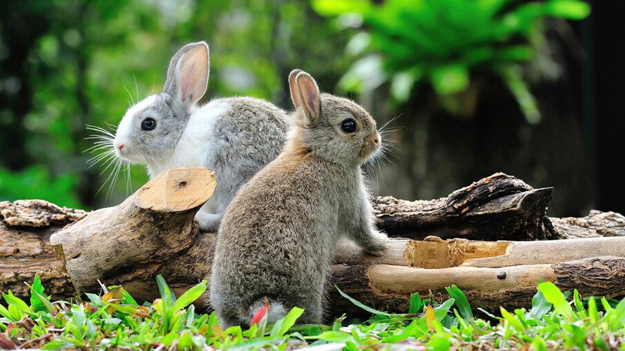 do rabbits really go
