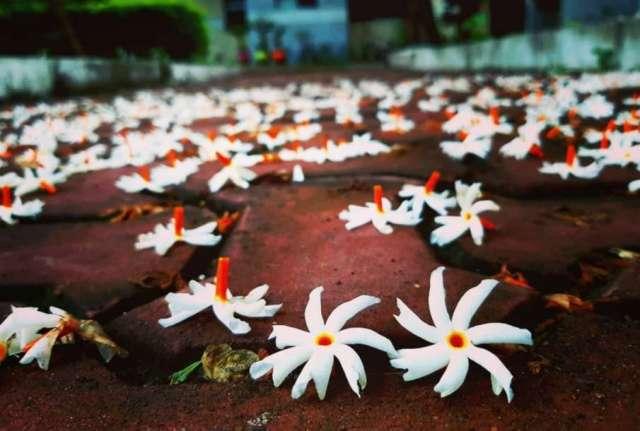 Parijat Flower- India TV Hindi