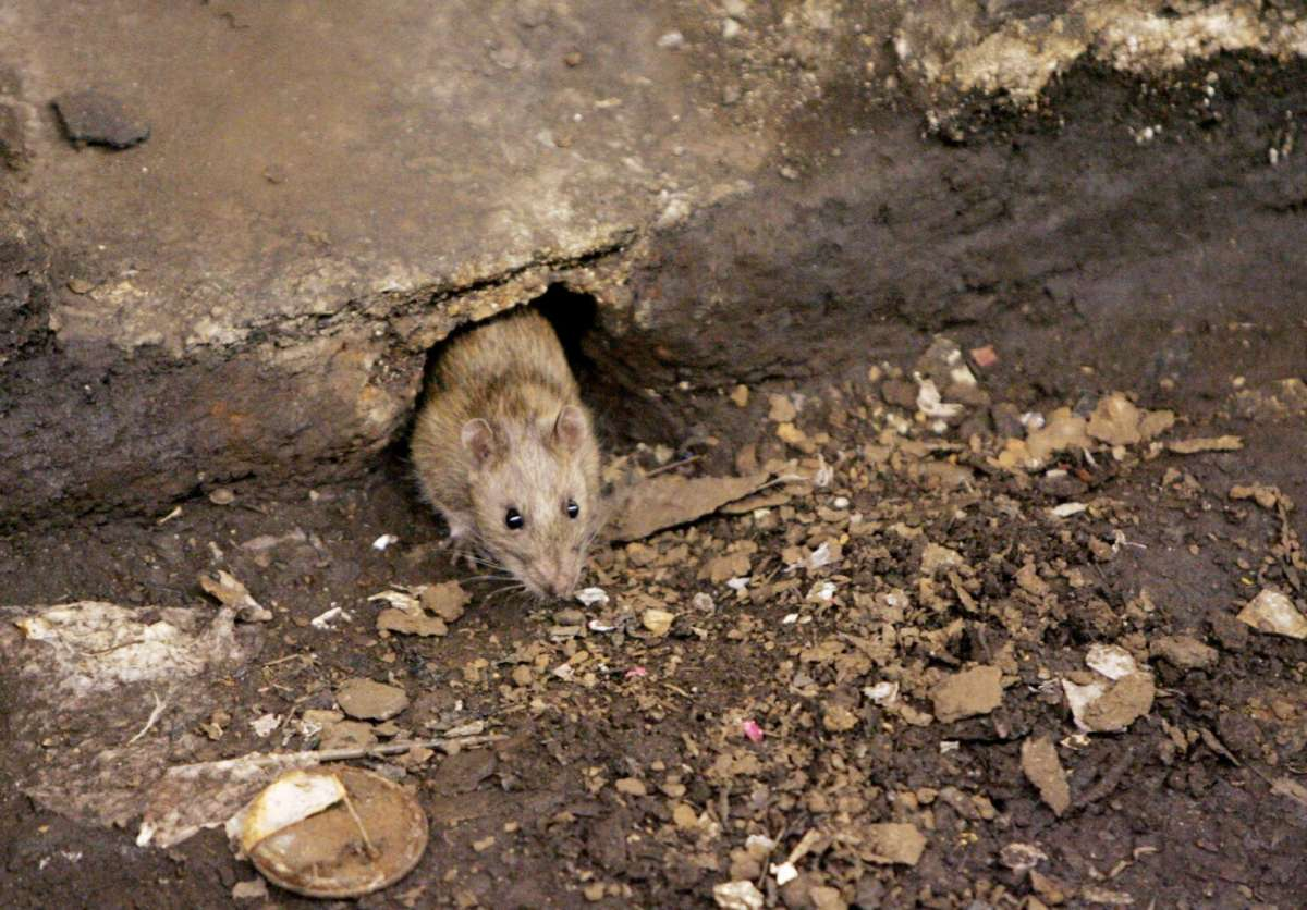 Hantavirus: Another virus emerges in China; everything you need to ...