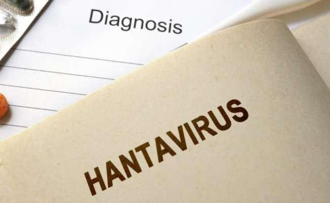 How Is Hantavirus Different From Coronavirus Everything