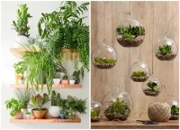 Decorate your home with indoor plants, 5 easy home decor ...