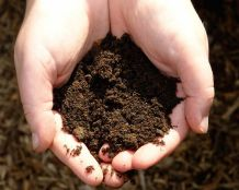 Image result for dirt