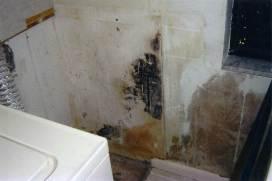 Moldy-wall