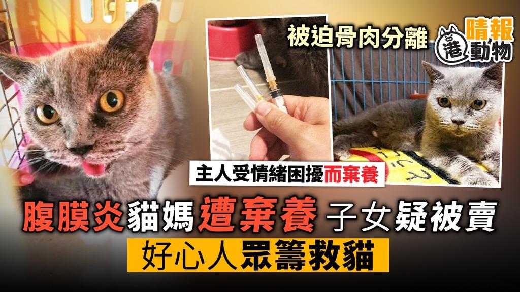 腹膜炎貓媽遭棄養 子女疑被賣 好心人眾籌救貓 - 晴報 - 寵物 - 寵物熱話 - D190627