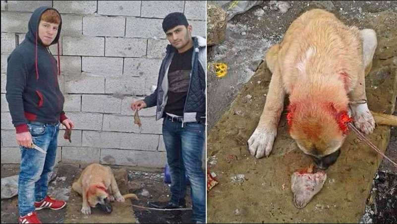 Will This Gruesome Viral Selfie Bring Justice to Turkish Animal Abusers? (NSFW)