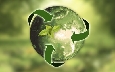 Improve Sustainability in The Kitchen